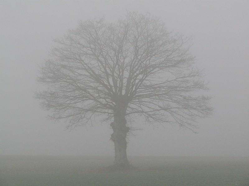 Fin de partie : Mea Culpa... Brouillard